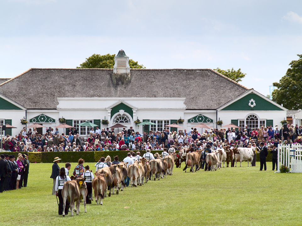 Cattle parade, Great Yorkshire Show 2011