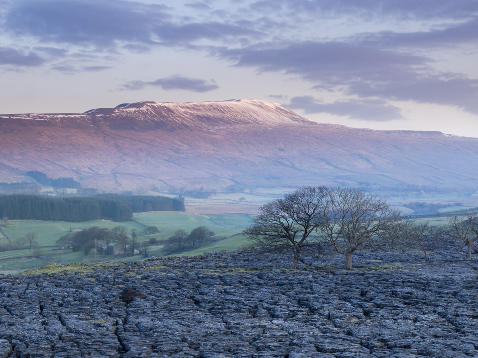 Whernside from Southerscales