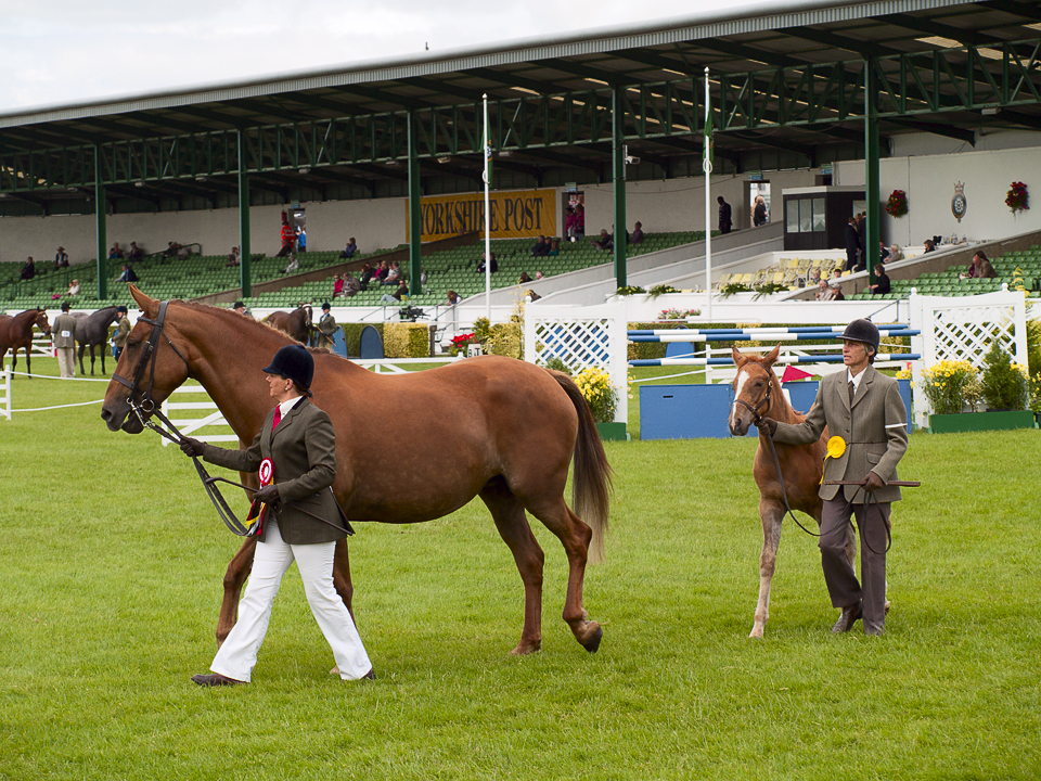 Great Yorkshire Show, 2011