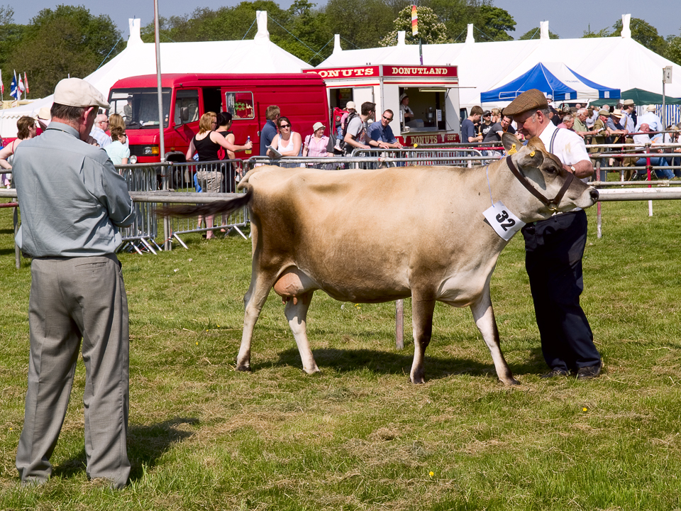 Judging the cattle, Otley show 2010