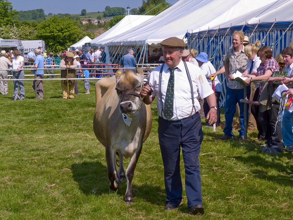Cattle judging, Otley show 2010